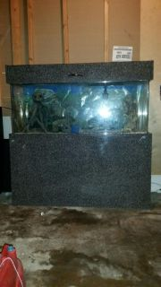 55gal fish tank with custom built stand and all accessories