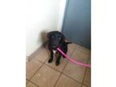 Adopt GRACEY a Black Border Collie / Shepherd (Unknown Type) / Mixed dog in
