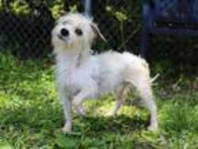 Adopt TIMON a Terrier (Unknown Type, Medium) / Mixed dog in Spring Valley