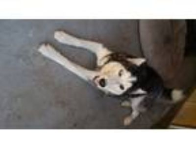 Adopt Kenny a White - with Black Husky / Mixed dog in La Mesa, CA (23898068)