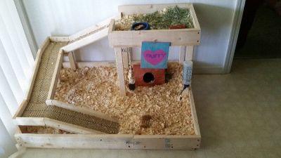 Gunnie pig playland