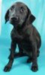 Pam Border Collie Dog