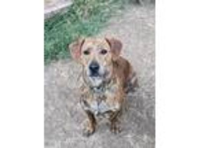Adopt Neon / Dodger a Hound (Unknown Type) / Mixed dog in Thousand Oaks