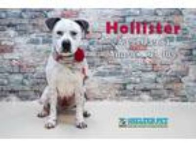Adopt Hollister K38 9-26-18 a White Catahoula Leopard Dog / Mixed dog in San