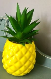 Aloe plant in pineapple planter