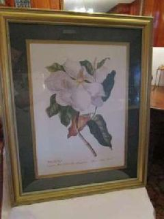 Beautiful Magnolia framed print