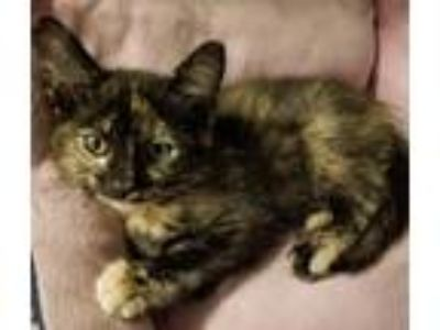 Kittens - For Sale Classified Ads in Connellsville
