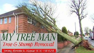 Tree & Stump Removal (678)558-8258 web///www.mytreeman.com