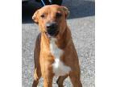 Adopt Bunker a Tan/Yellow/Fawn Shepherd (Unknown Type) / Mixed dog in Reeds