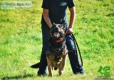 Police Cas ( K ) Personal Protection Dogs and Trained Pets