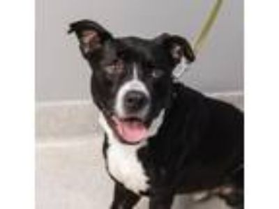 Adopt Fennel a Black Mixed Breed (Large) / Mixed dog in Lansing, MI (25449664)