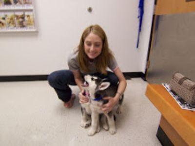 Cute Siberian husky puppies available