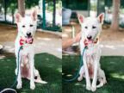 Adopt PUCCA a Mixed Breed
