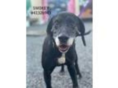 Adopt Smokey - stray a Black Hound (Unknown Type) / Mixed dog in Wilkes Barre