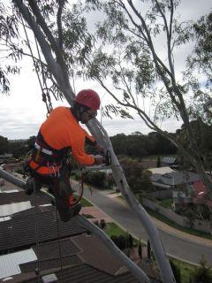 Professional Tree Pruning Adelaide -  Sturt Stump Cutters