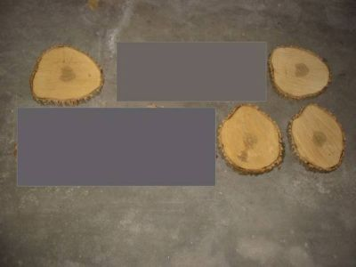 4 ASH wood slabs 13-15 in slices rustic wedding cake centerpiece