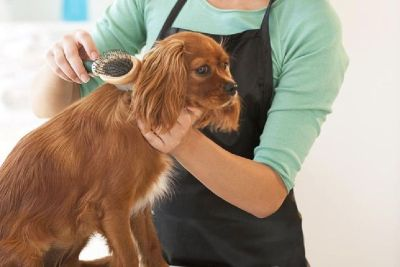 Best Pet Groomer Studio City | BoneSweetBone.com