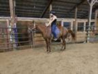 Adopt Sadie a Chestnut/Sorrel Quarterhorse / Mixed horse in Sidell