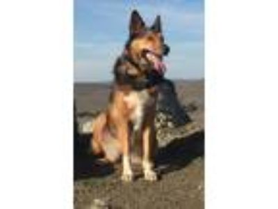 Adopt RUTHIE a Collie / Australian Shepherd / Mixed dog in Pt.