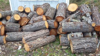 Free Firewood - Fir located in Wilderville