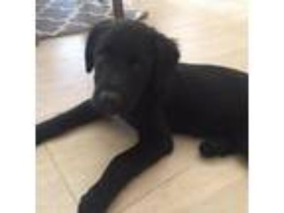 Craigslist - Dogs for Adoption Classified Ads in Holland