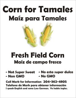 Field corn for Tamales