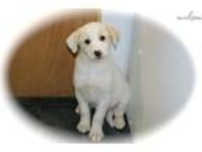 PICK ME Labrador Mix. Female.