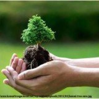 Lawn care Lenexa | Lawn Care Shawnee