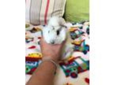 Pigs - Animals and Pets for Adoption Classifieds in Rocklin