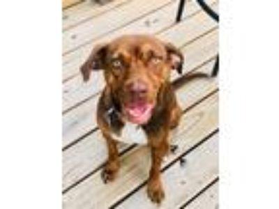 Richmond Craigslist Pets