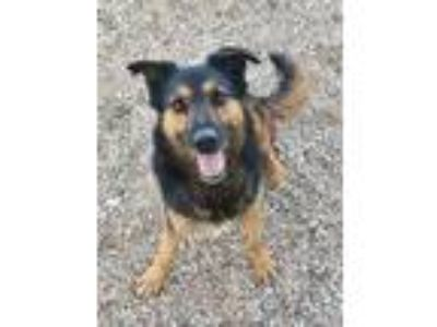 Adopt Jasmine a Black Shepherd (Unknown Type) / Mixed dog in Wickenburg