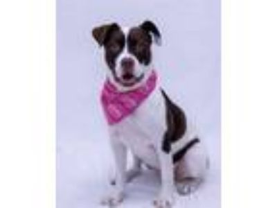 Adopt Nay Nay a Pit Bull Terrier