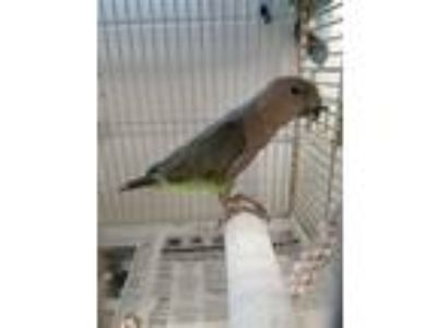 Craigslist - Birds for Adoption Classified Ads in Richmond, Virginia