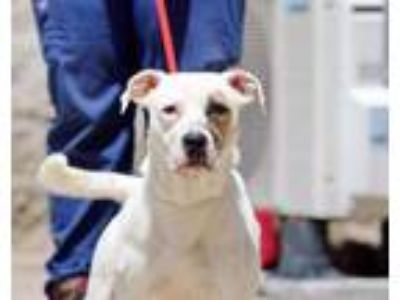 Adopt Chance a White Mixed Breed (Large) / Mixed dog in Charleston