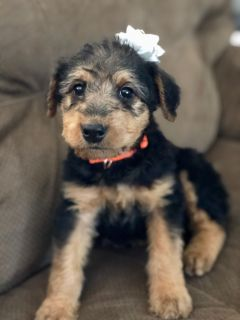 Craigslist Animals And Pets For