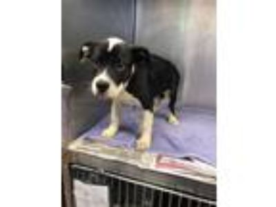 Adopt Ham Sandwich - ADOPTED a Mixed Breed
