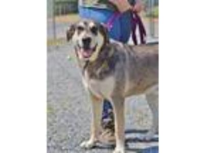 Adopt Bandit a Shepherd (Unknown Type) / Mixed dog in Madison, NJ (25527352)