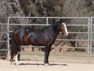Dixie Pretty Mustang Mare