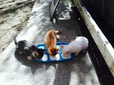 Free kittens in Pomona!