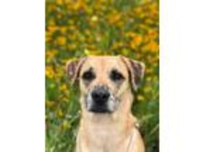 Adopt Emory a Brown/Chocolate Mixed Breed (Medium) / Mixed dog in Leander