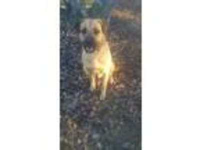 Adopt BEAR (RESCUE ONLY) a Rottweiler / Mixed Breed (Medium) / Mixed dog in