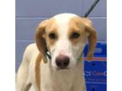Adopt Elaine a White - with Tan, Yellow or Fawn Mixed Breed (Medium) dog in