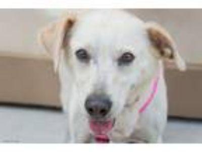 Adopt Roxy a Retriever, Terrier