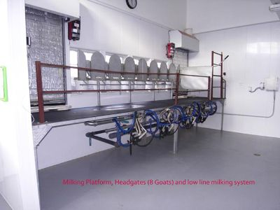 Cheesemaking and Dairy Equipment for sale