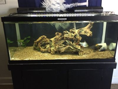 75 gallon fish tank