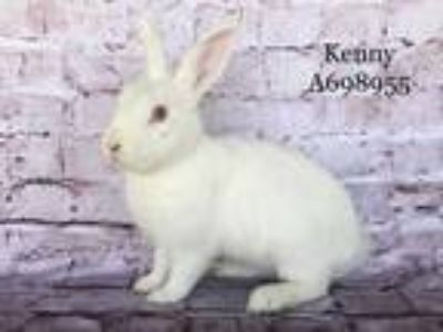 Adopt *KENNY a White Other/Unknown / Mixed rabbit in Camarillo, CA (23806449)
