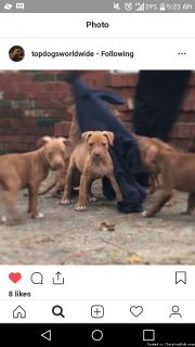 Amazing puppies looking for forever home