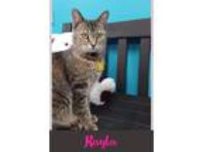 Adopt Rayla a Domestic Shorthair / Mixed (short coat) cat in Kendallville