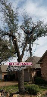 HAYVEN'S TREE SERVICE