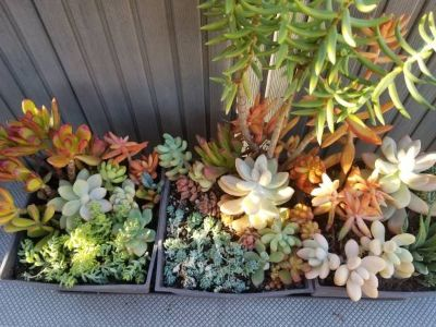 Low priced variety of succulents and drought tolerant plants